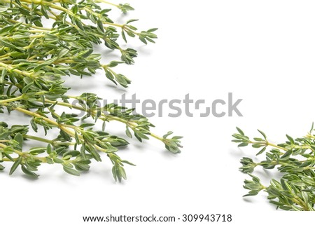 fresh green thyme, Thymus vulgaris, in two corners isolated on a white background, copy space - stock photo