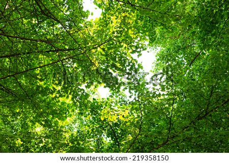 Fresh green tree in forest.  - stock photo