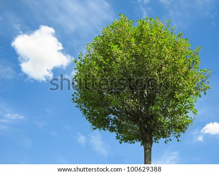 Fresh green tree on a sunny day, with blue sky and white clouds on background - stock photo