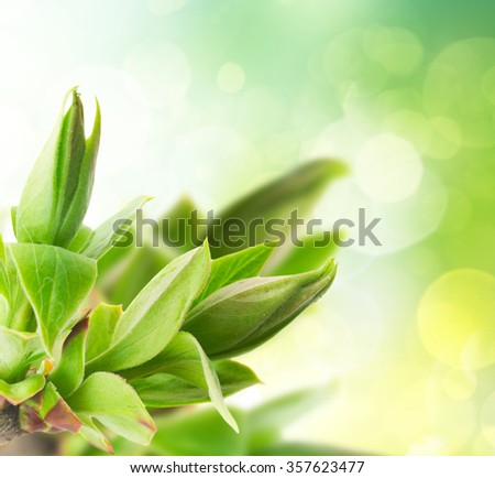 fresh green tree sprouts  in garden on bpkeh background