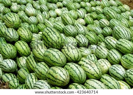 Fresh green watermelon in a market - stock photo