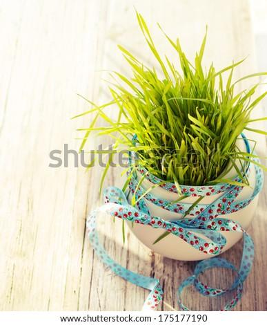 Fresh green wheatgrass in white bowl on sunny spring background - stock photo