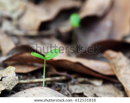 fresh green young plant of new seed born and grow up on a dark brown earth floor covered with dried brown leaves in jungle after rain showing contrast of colors lighting meaning and feeling of life
