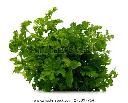 fresh harvested parsley on white background  - stock photo