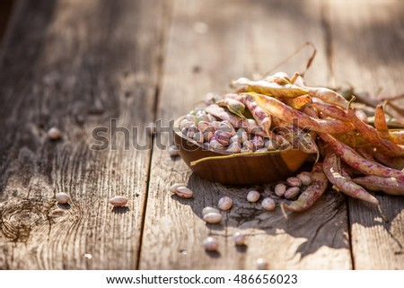 Fresh harvested pinto / cranberry beans with pods on a wooden background on a sunny day. Also available in vertical format.