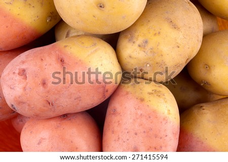 Fresh harvested potato tubers - stock photo