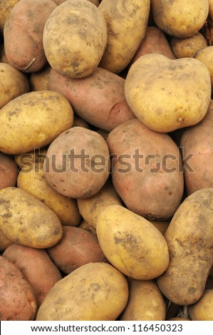 Fresh harvested potatoes