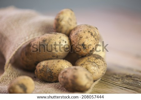 Fresh harvested potatoes with soil on wooden table  - stock photo