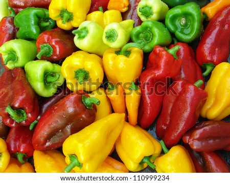 fresh harvested sweet peppers different varieties - stock photo