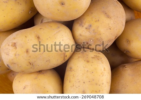 Fresh harvested yellow potato tubers - stock photo