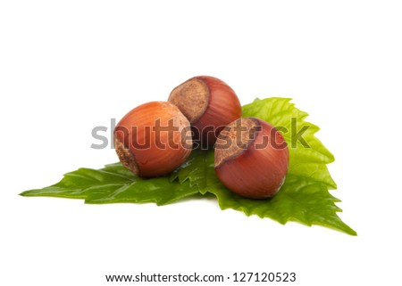 fresh hazelnuts with green leaf isolated on white background