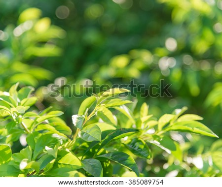 Fresh healthy green bio and eco nature theme with abstract blurred foliage and bright sunlight. Sunny bokeh green nature defocused background. Selective soft focus with shallow DOF. Element of design - stock photo