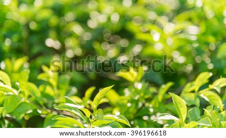 Fresh healthy green bio and eco nature theme with abstract blurred foliage and bright sunlight. Sunny bokeh green nature defocused background. Selective soft focus with shallow DOF. Panoramic style. - stock photo