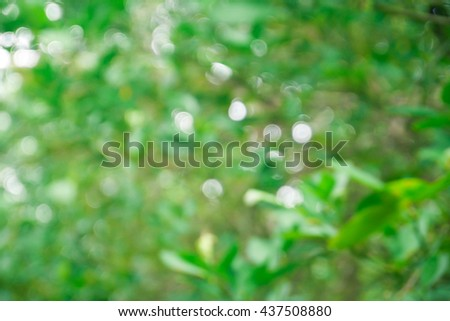 Fresh healthy green bio background with abstract blurred foliage and bright summer sunlight and a central copyspace for your text or advertisment