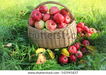 Fresh healthy organic apples in the basket