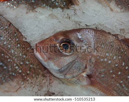 Fresh Healthy Wild New Zealand Snapper on Ice.