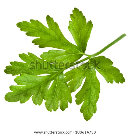 fresh herb parsley close up isolated on white background