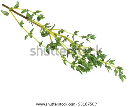 fresh herb thyme isolated on white - stock photo