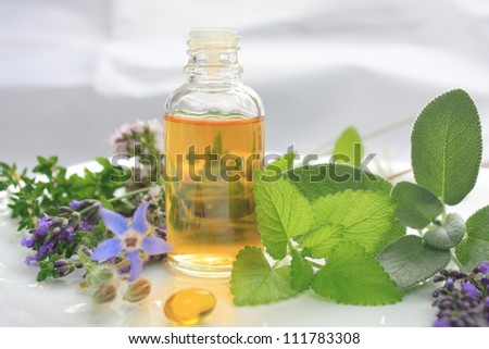 Fresh herbs and oil. Natural medicine - stock photo
