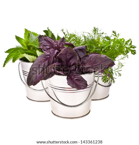 fresh herbs - basil, dill and mint for cooking in tin buckets overturned  isolated on white background - stock photo