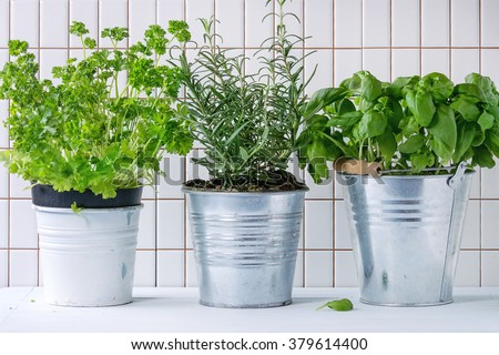Fresh herbs Basil, rosemary and parsley in metal pots over kitchen table with white tiled wall at background. - stock photo