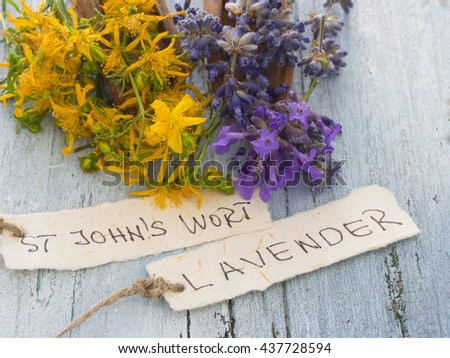 fresh herbs cosmetics, St John;s wort and lavender - stock photo