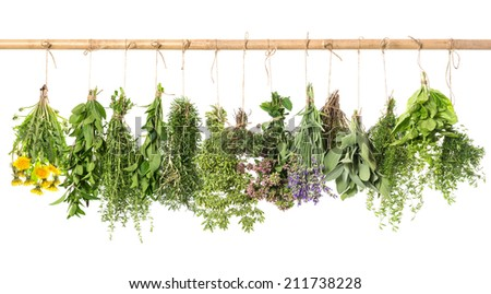 fresh herbs hanging isolated on white background. basil, rosemary, sage, thyme, mint, oregano, marjoram, savory, lavender, dandelion - stock photo