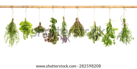 Fresh herbs hanging isolated on white background. Bundle of basil, sage, thyme, dill, mint, marjoram, lavender - stock photo
