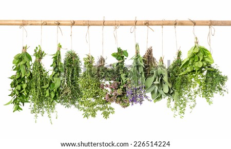 fresh herbs hanging isolated on white background. thyme, mint, basil, rosemary, sage, oregano, marjoram, savory, lavender - stock photo