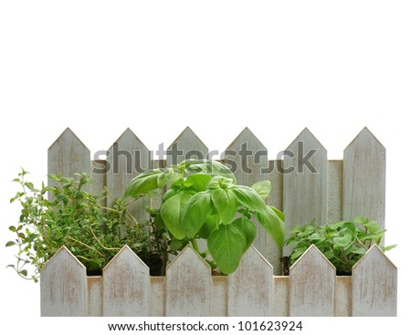 Fresh Herbs In A Decorative Flowerpot On White Background - stock photo