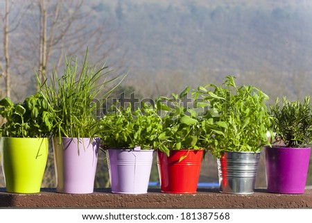 Fresh herbs in ceramic and metal pots on the balcony - stock photo