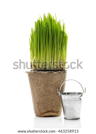 Fresh herbs in peat pot on white background. Garden tools.
