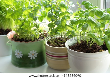 Fresh herbs in pots on a window (basil, mint, lemon balm and chives) - stock photo