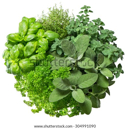 Fresh herbs isolated on white background. Food ingredients. Basil, marjoram, parsley, rosemary, thyme, sage. Organic herbs - stock photo