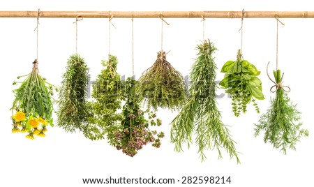 Fresh herbs isolated on white background. Hanging bunches of dill, basil, rosemary, thyme, oregano, marjoram, dandelion. Tasty food ingredients. - stock photo