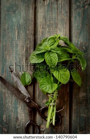 Fresh herbs. mint in rustic setting with antique scissors - stock photo