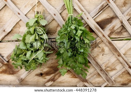 fresh herbs nettle and parsley on wooden background