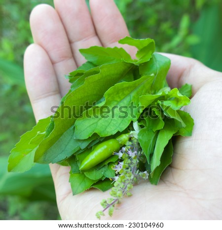 Fresh Herbs on Hand - stock photo