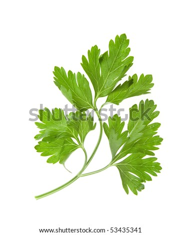 fresh herbs parsley on a white - stock photo