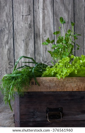 Fresh herbs. Salat, rosemary and mint in rustic setting