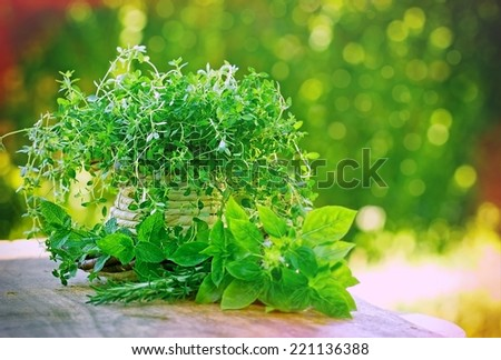 Fresh herbs - spices on table - stock photo