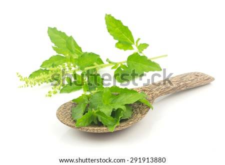 Fresh holy basil leaves  - herb on white background - stock photo