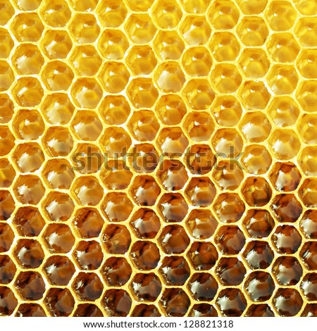 fresh honey in honeycomb - stock photo