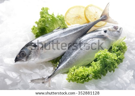 Fresh horse mackerel - stock photo
