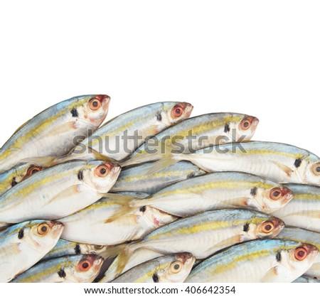 Fresh horse mackerel fish isolated on white background - stock photo