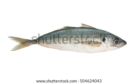 Fresh horse mackerel fish isolated on white background