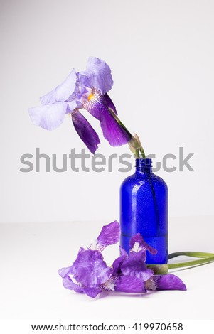 Fresh irises in water on a white table - stock photo