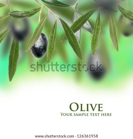 Fresh isolated olive on the tree - stock photo