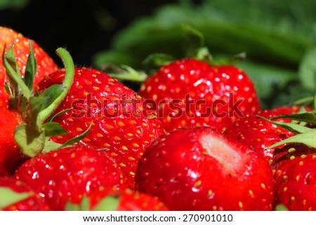 fresh, juicy and healthy strawberries - stock photo
