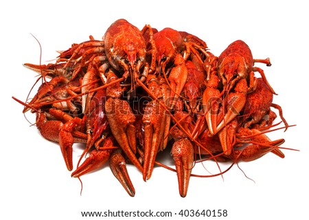 Fresh juicy boiled crawfish closeup isolated on white background. seafood, healthy food. - stock photo